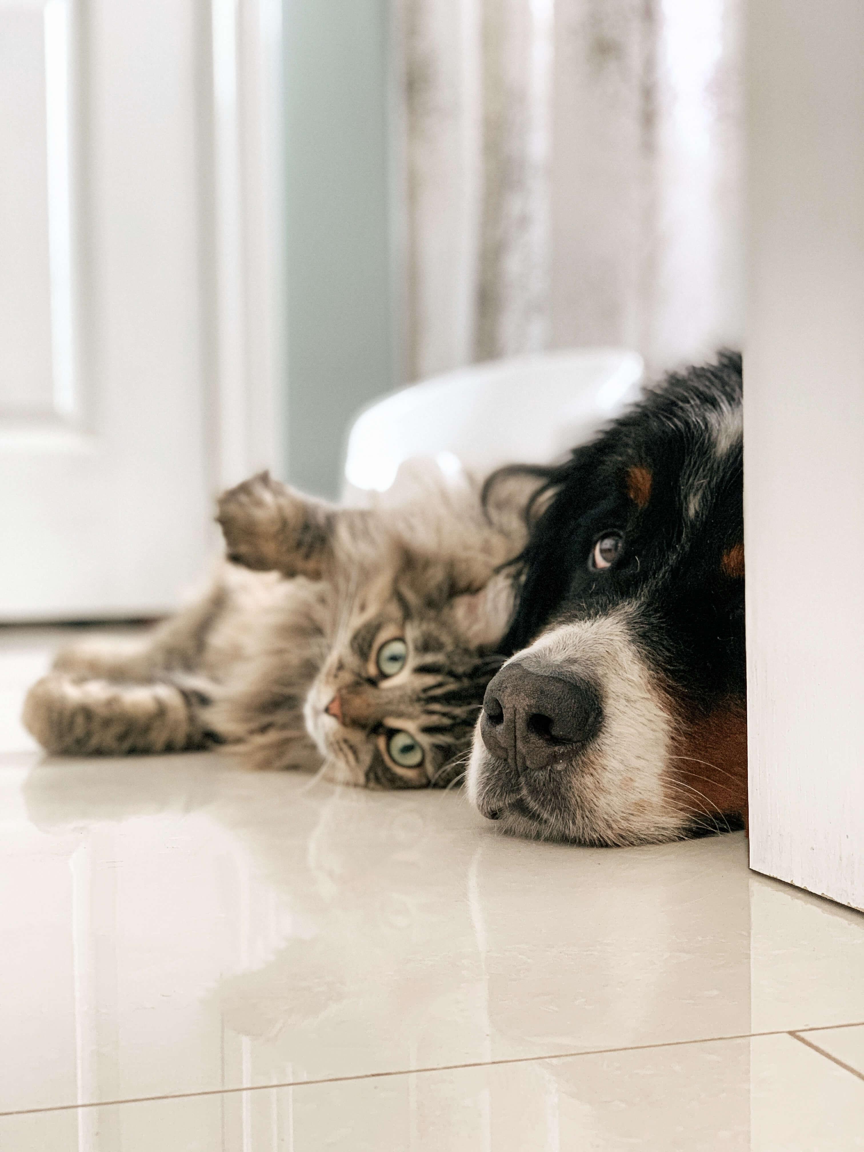 Pet Friendly apartments in Wichita