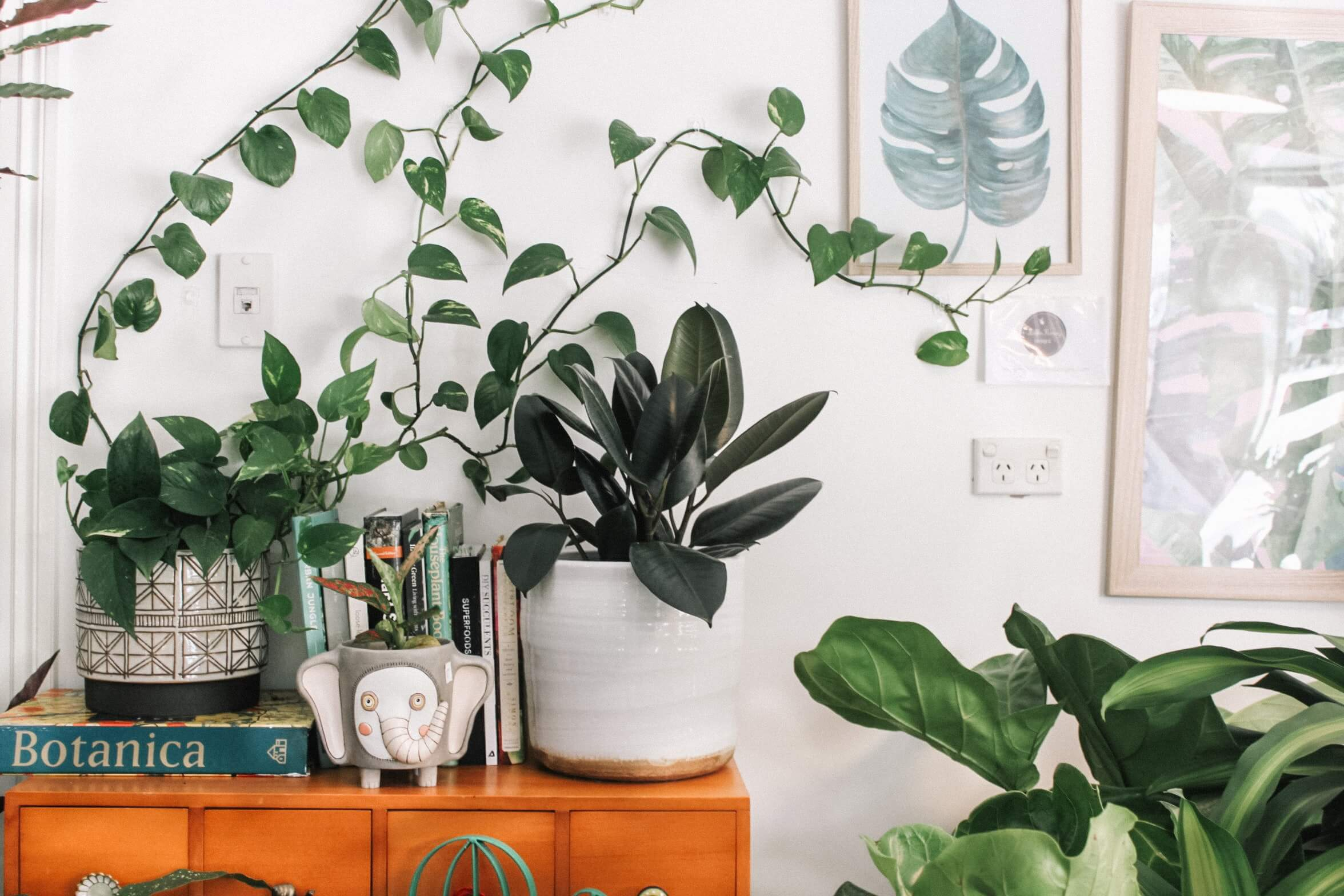 succulents and plants to decorate apartment