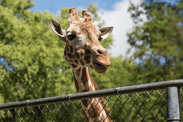 zoo in Wichita KS