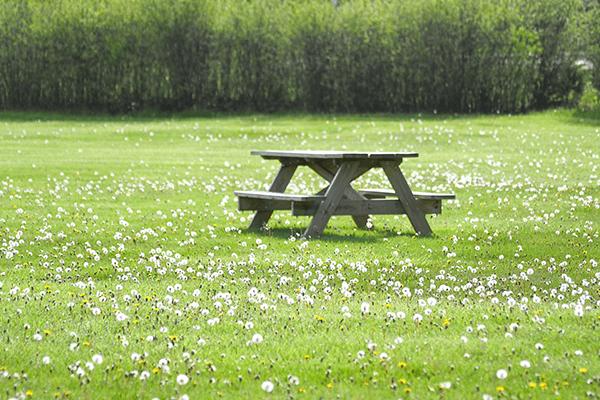 hawthorn park