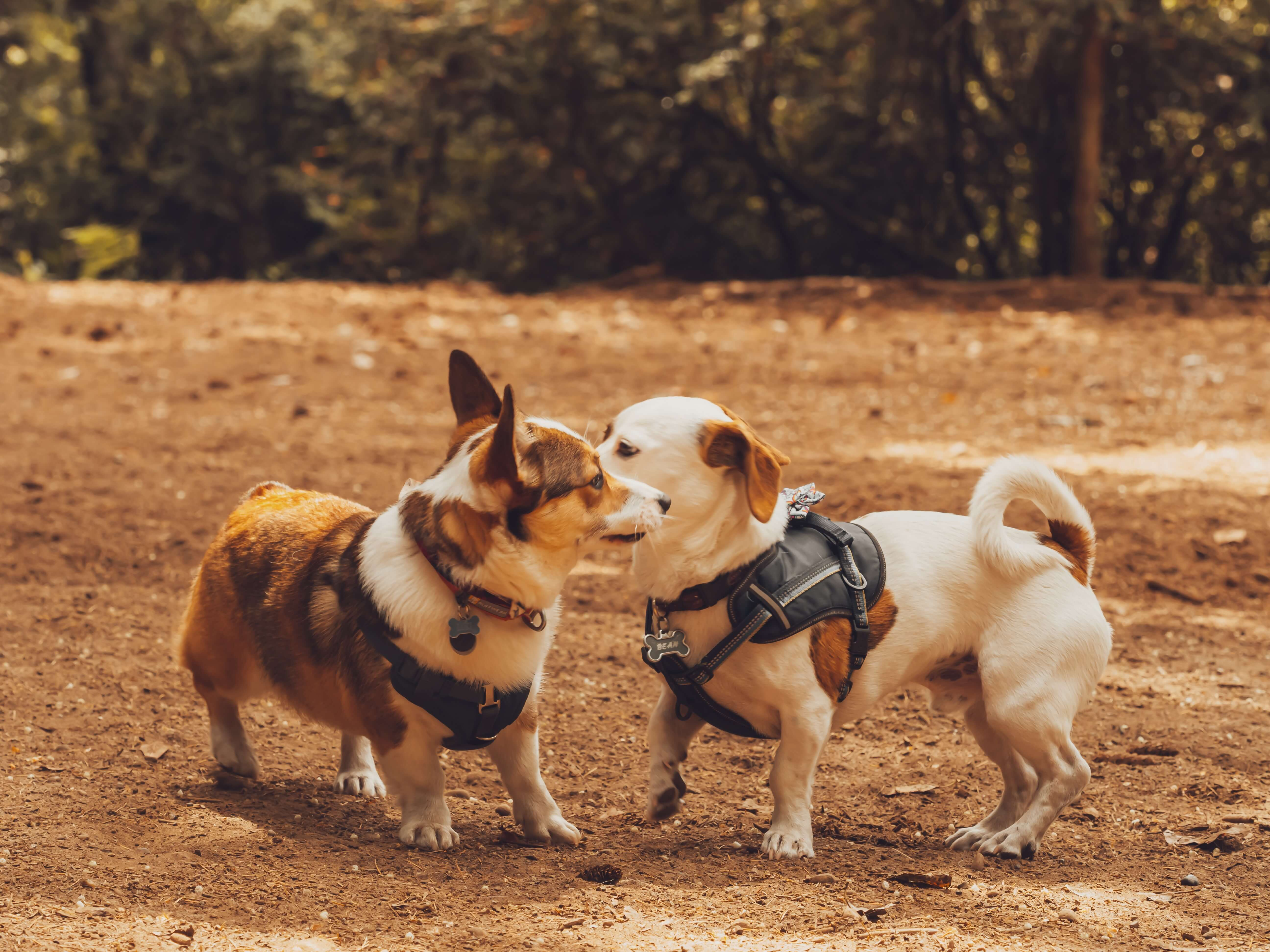 dog friendly park