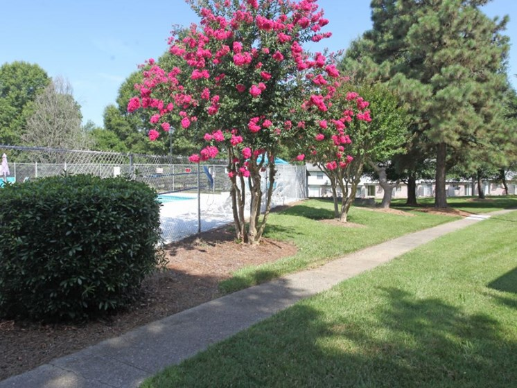Outside of fenced in pool with crepe myrtle tree in bloom