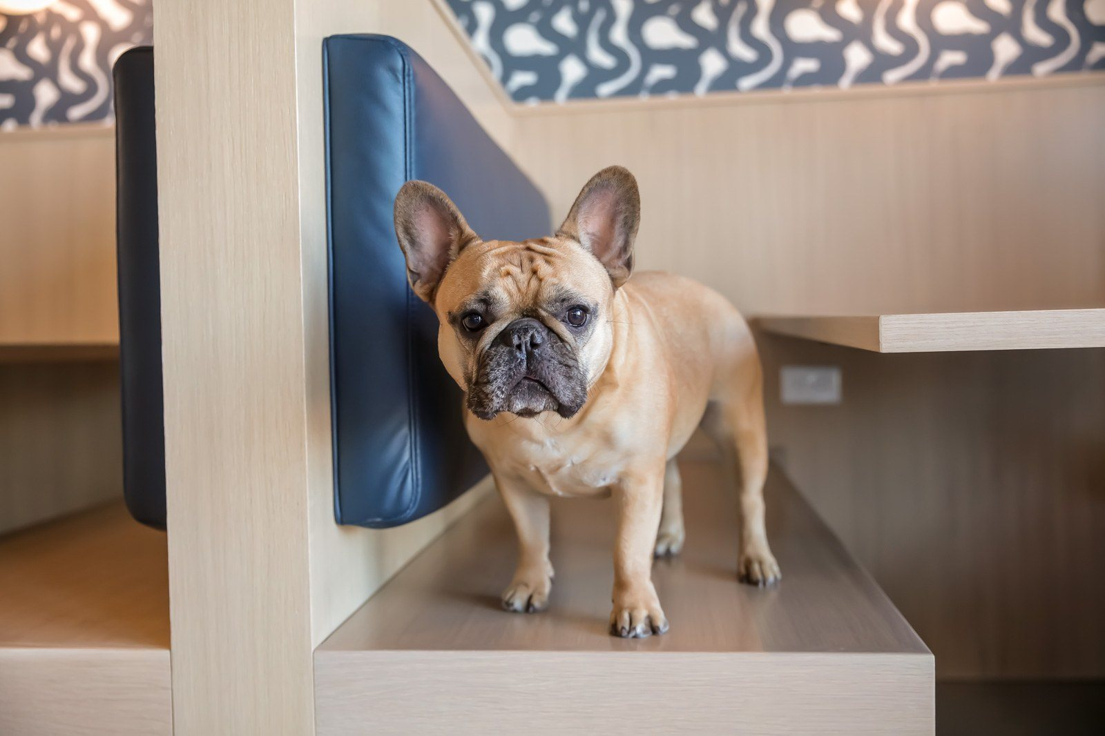 Dog in lobby booth seating at Pet friendly apartments