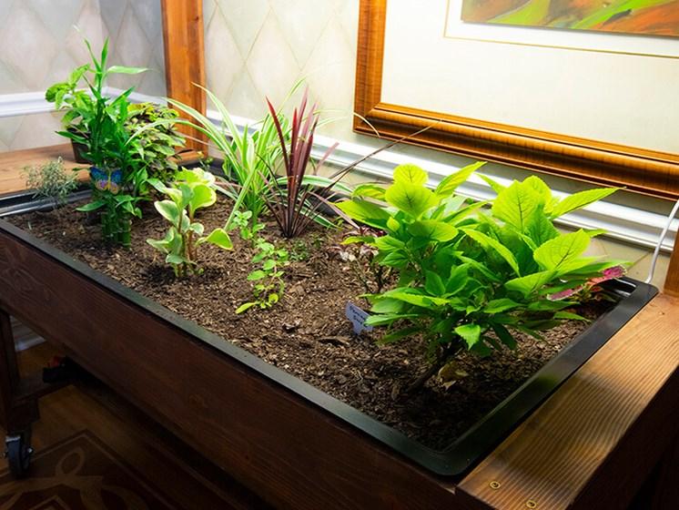 New Green Plants at Savannah Grand of Maitland, Maitland, 32751