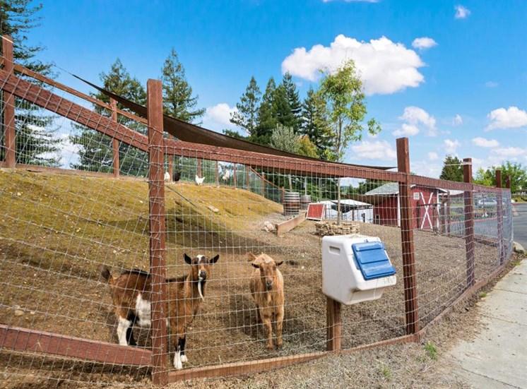 Petting Farm at Healdsburg, A Pacifica Senior Living Community, Healdsburg