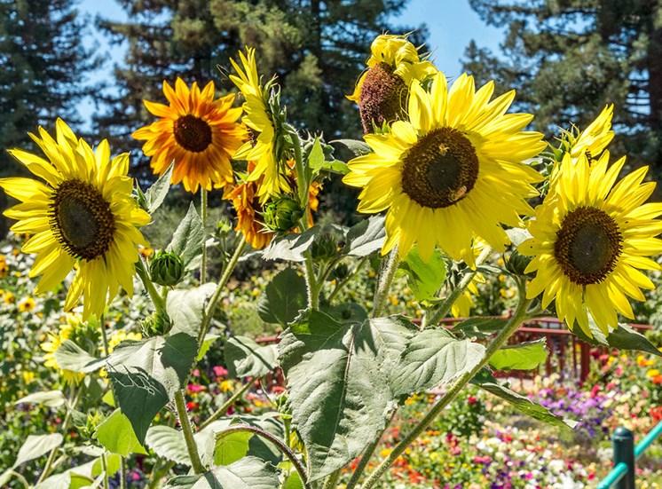 Elegant Flowers at Healdsburg, A Pacifica Senior Living Community, Healdsburg, California