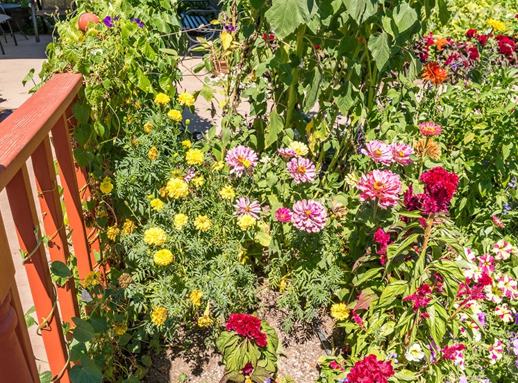 Different Beautiful Flowers at Healdsburg, A Pacifica Senior Living Community, Healdsburg