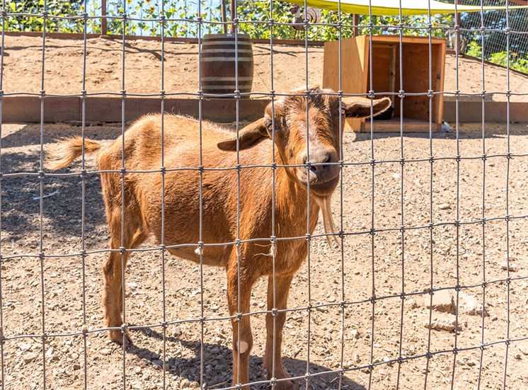 Fenced Garden at Healdsburg, A Pacifica Senior Living Community, Healdsburg, California