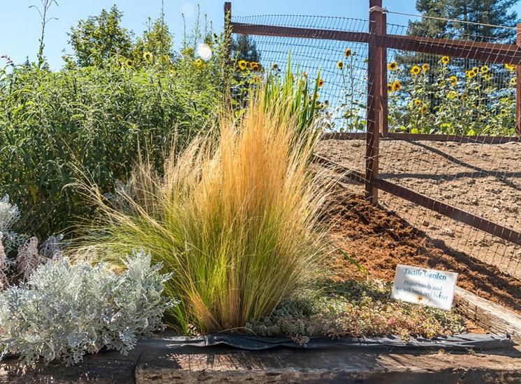 Drought Resistant Plants at Healdsburg, A Pacifica Senior Living Community, Healdsburg, CA, 95448