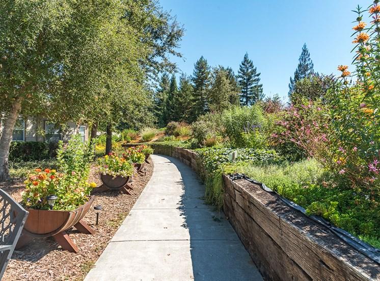 Walking Path Across Garden at Healdsburg, A Pacifica Senior Living Community, Healdsburg, CA