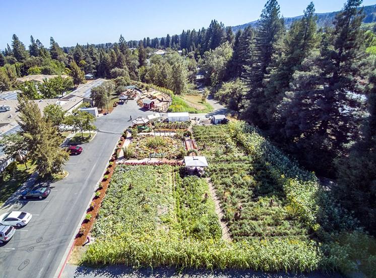 Top View Of Garden at Healdsburg, A Pacifica Senior Living Community, Healdsburg, 95448