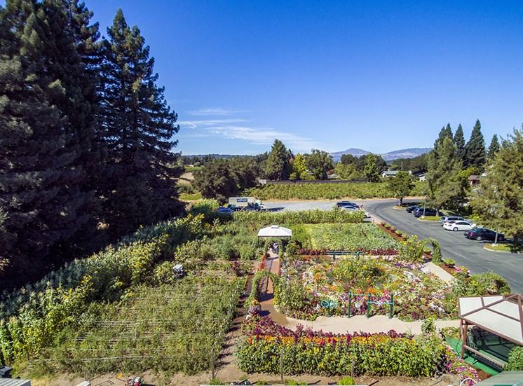 Organic Garden at Healdsburg, A Pacifica Senior Living Community, California