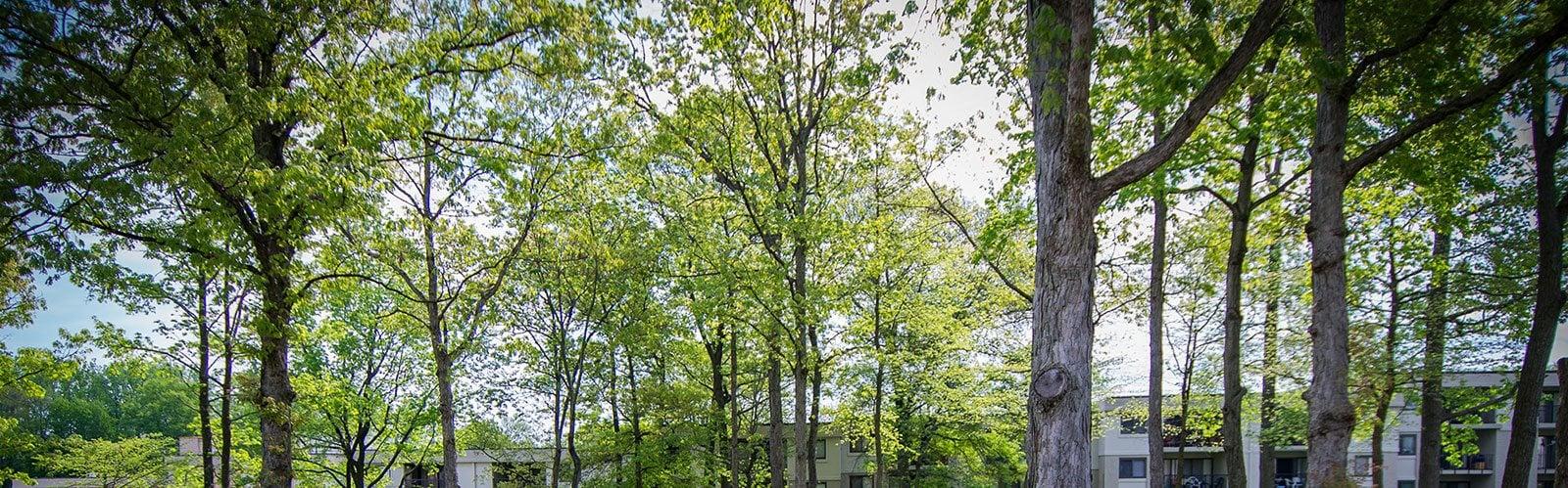 Ashley Apartments Tree Tops Photo