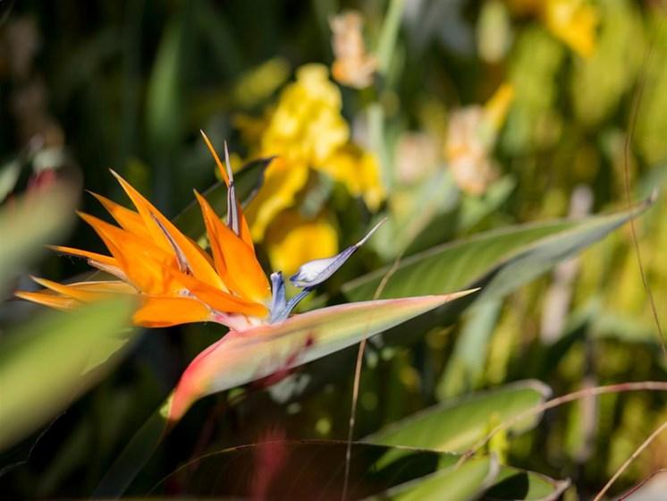 Beautiful Flower at Cogir of Stock Ranch, California, 95621