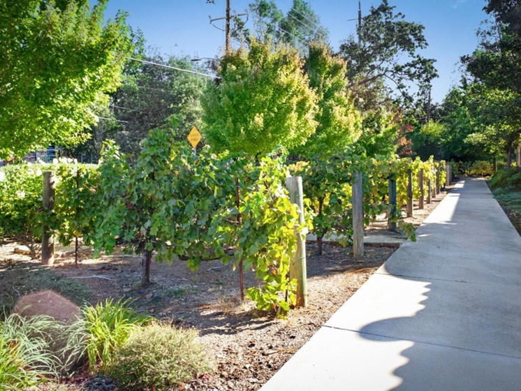 Gardens With Courtyard at Cogir On Napa Road, California