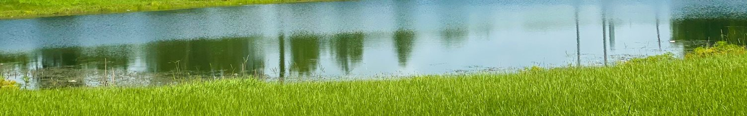 Lake surrounded by grass area and trees