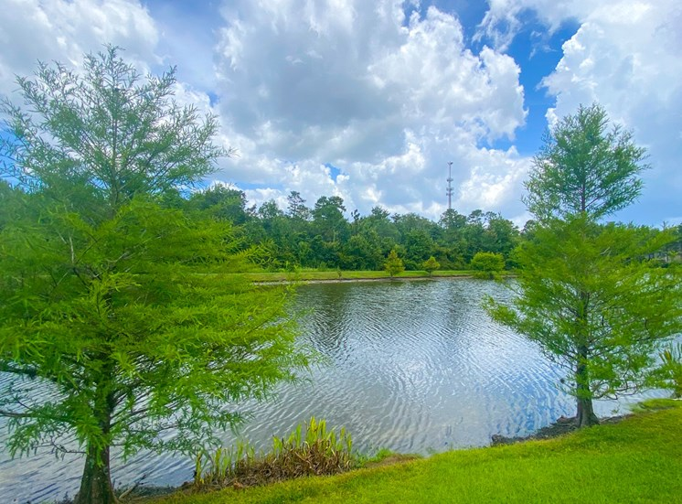 Lake view surrounded by native landscaping