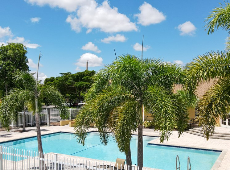 Swimming Pool with Sundeck Surrounded by Palm Trees