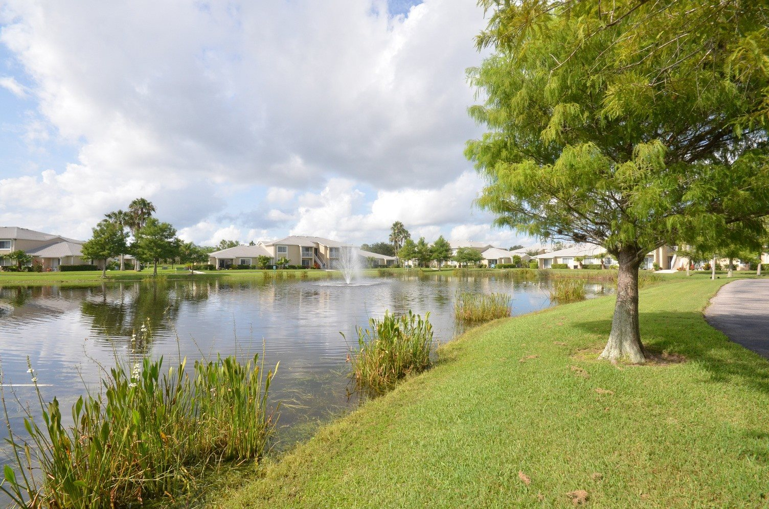 Waterfront View with Trees and Building Exteriors