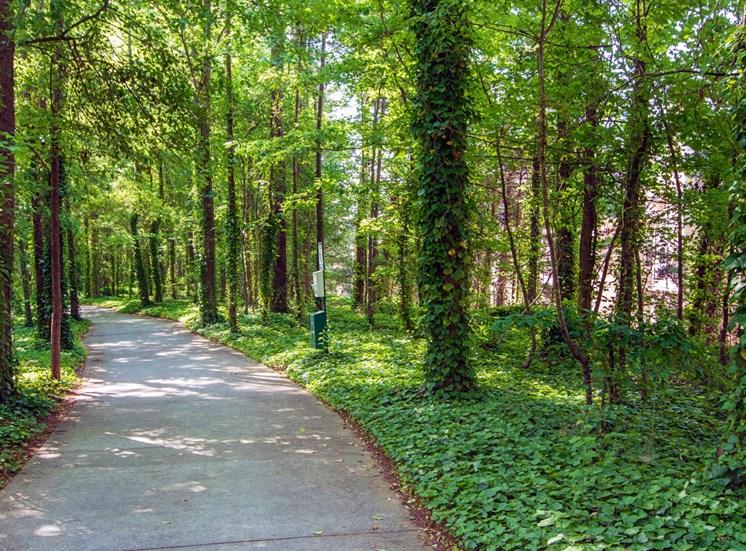 Sidewalk Shaded by Tall Trees