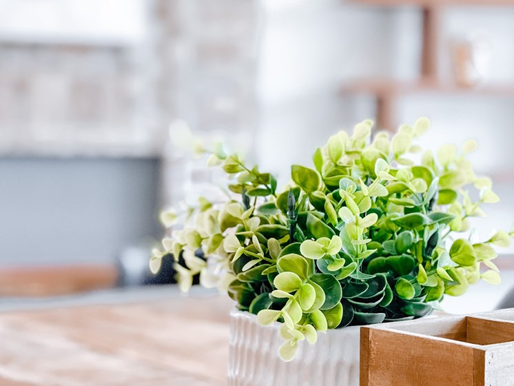 small plant on desk