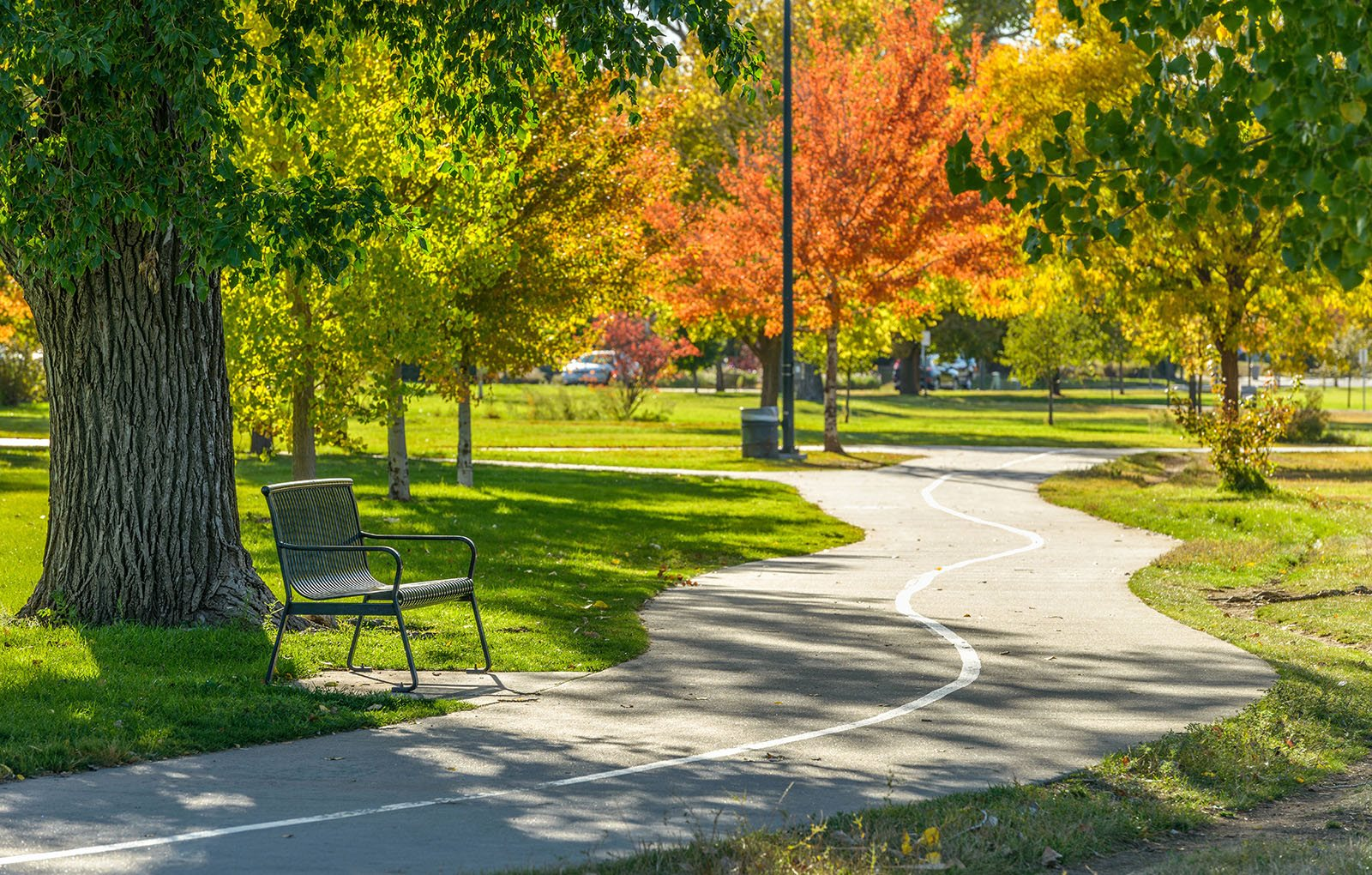 Park with bench and bike path