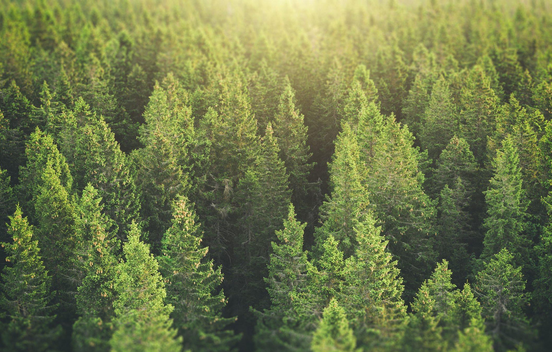 stock image- woods