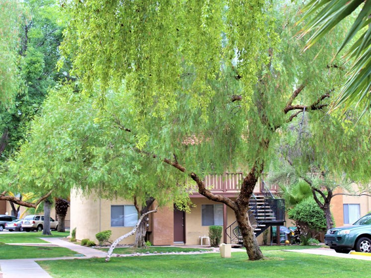 Landscaping with Shade Trees