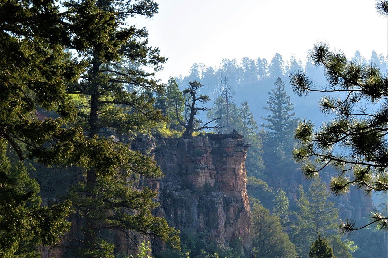 Mountain view at corp_59800,Flagstaff,AZ
