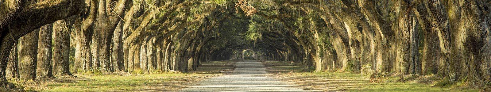 Savannah GA Trees Image at Legends at Chatham, Savannah, GA
