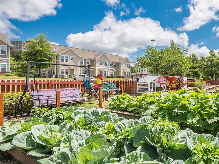 Garden beds-Metropolitan Village and Cumberland Manor Apartments, Little Rock, AR
