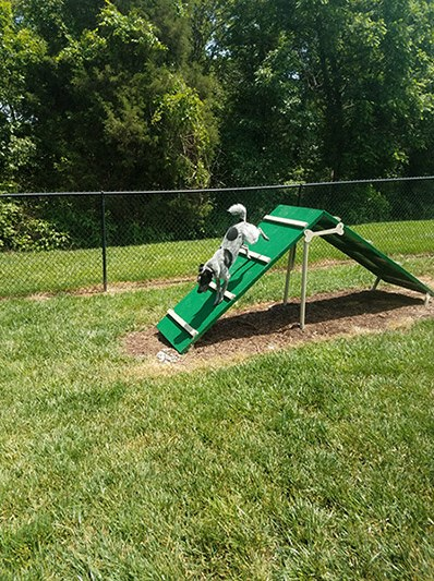 Pets playground area at Abberly Green Apartment Homes by HHHunt,  Mooresville, NC 28117