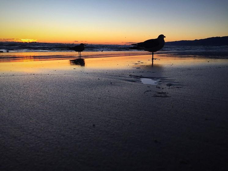 Fabulous Beach View at 301 Ocean Ave, Santa Monica