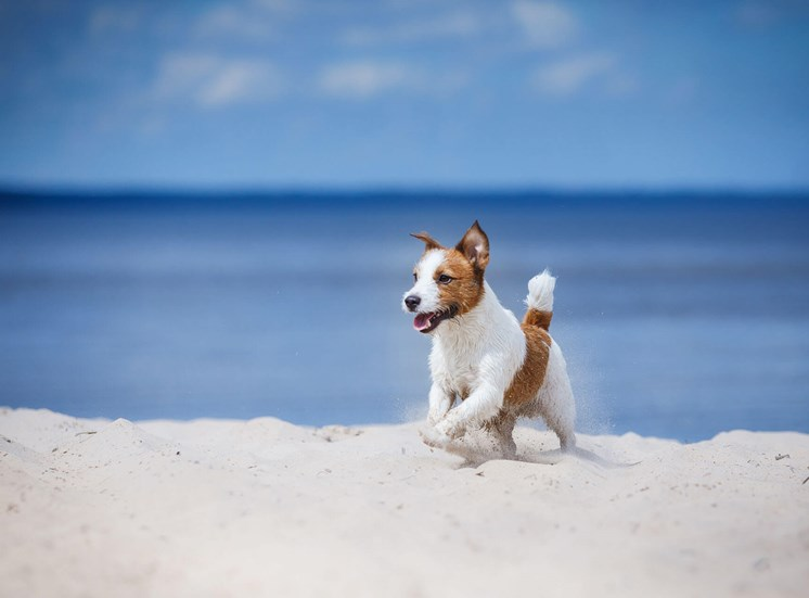 Shoreview dog on beach