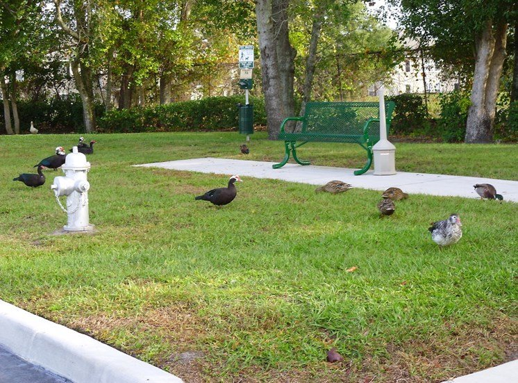 St. Anthony Garden Court apartments in St. Cloud, FL courtyard with ducks