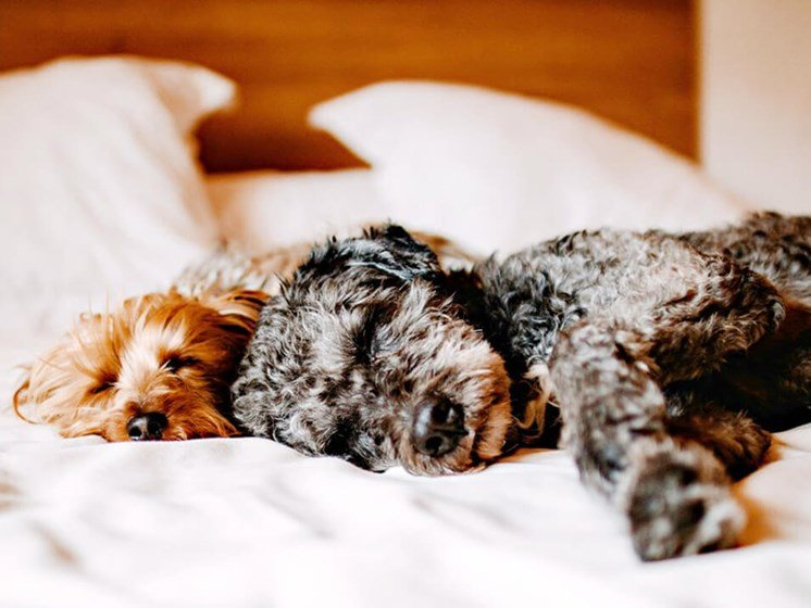 pet friendly apartments at Toldeo OH apartments
