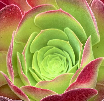 Succulent Plant at The Sur, Arlington, 22202
