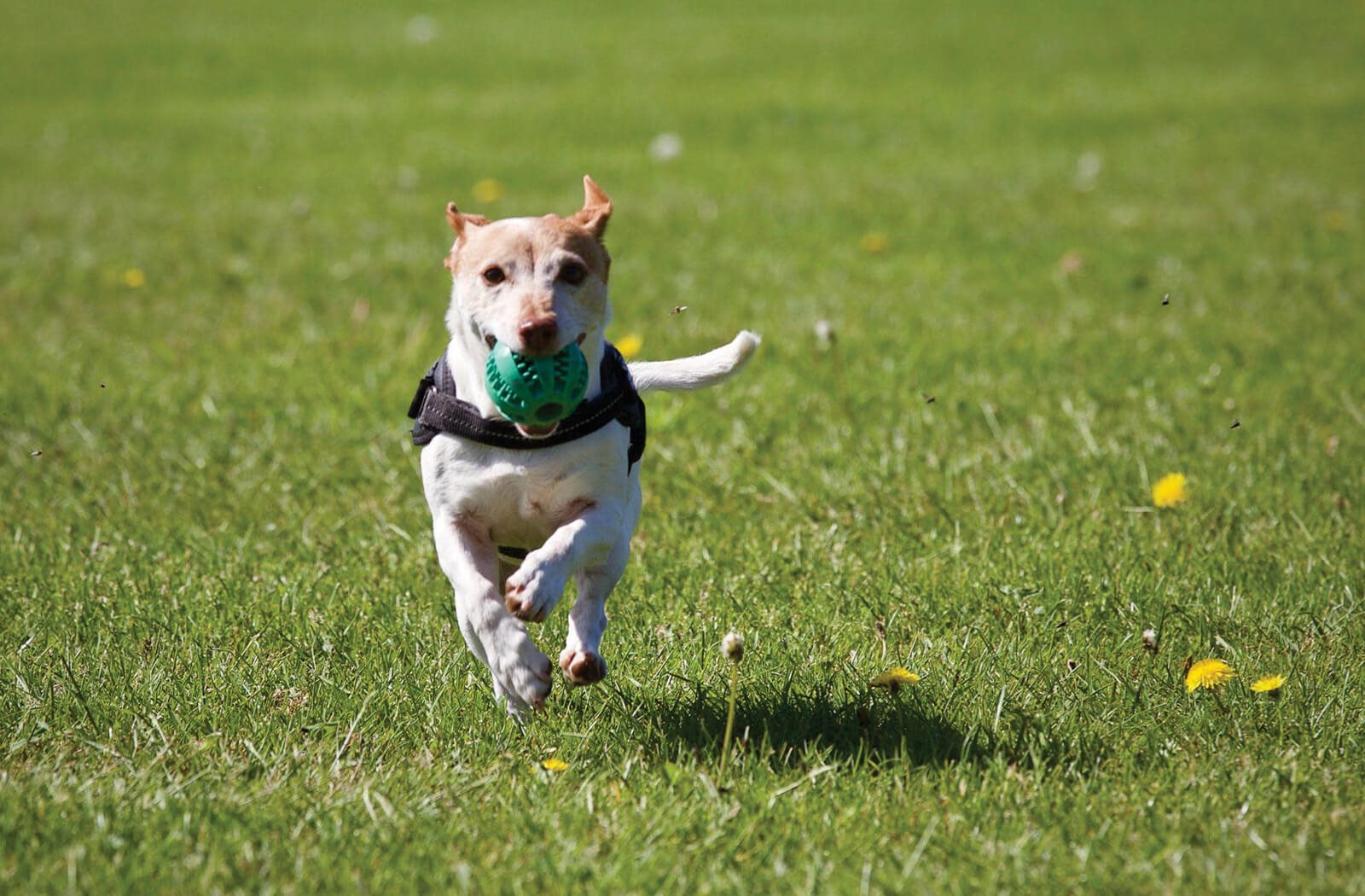 Pet friendly apartments in Fayetteville NC