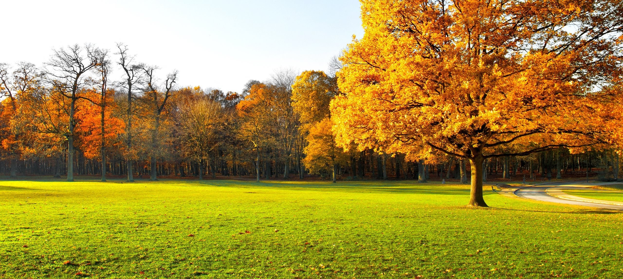 Generic image of grass and trees