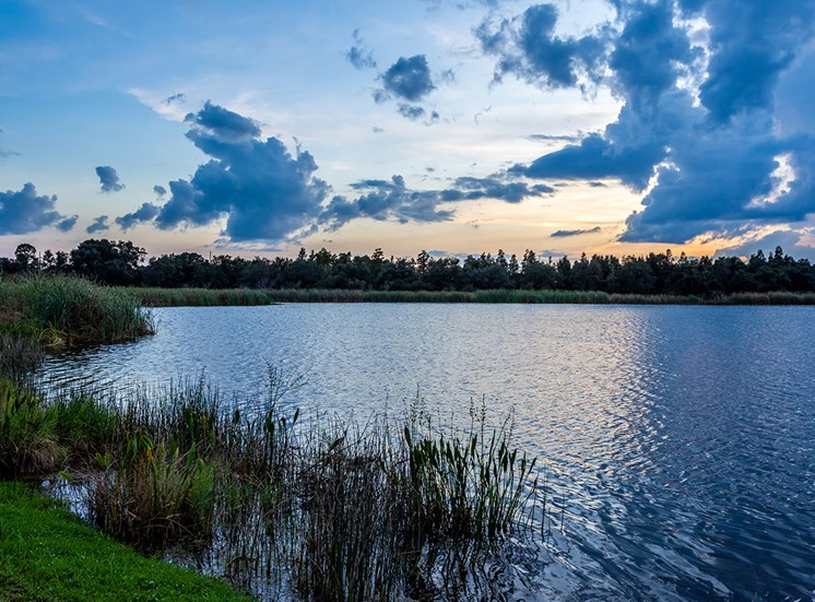 Mallory Square wetlands in Tampa, Florida
