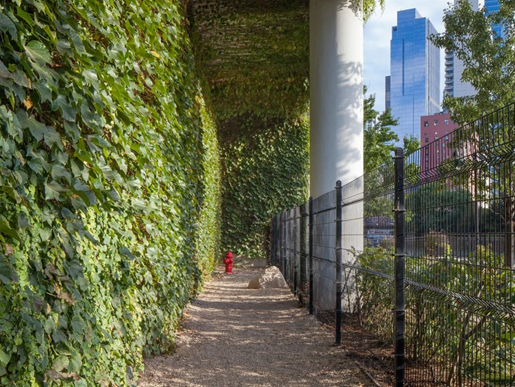Outdoor dog run with living green wall and gated area