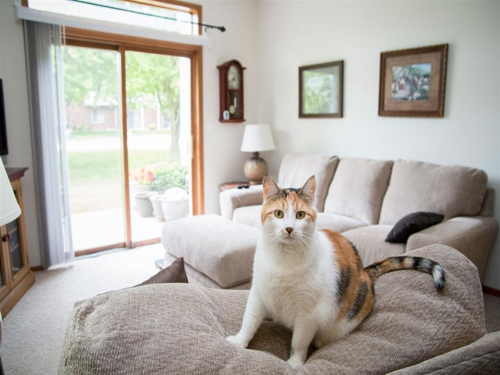 Cats welcome at Wyndham Heights Apartments in Ames IA