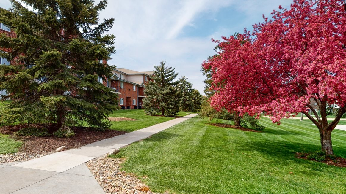 Sidewalk framed by green grass and lined with hot pink blooming tree and pine trees
