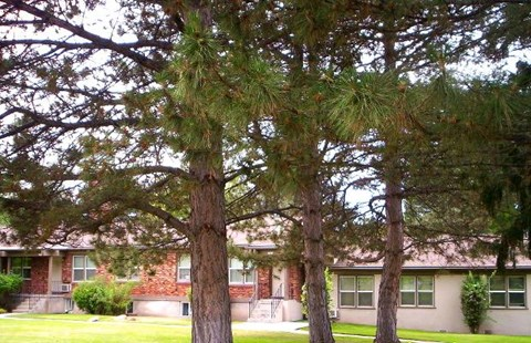 College Park Apts with Mature Trees