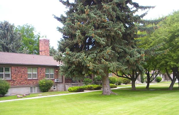 College Park Lawn and Mature Trees
