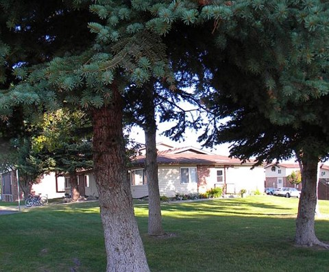 Mature trees on the property