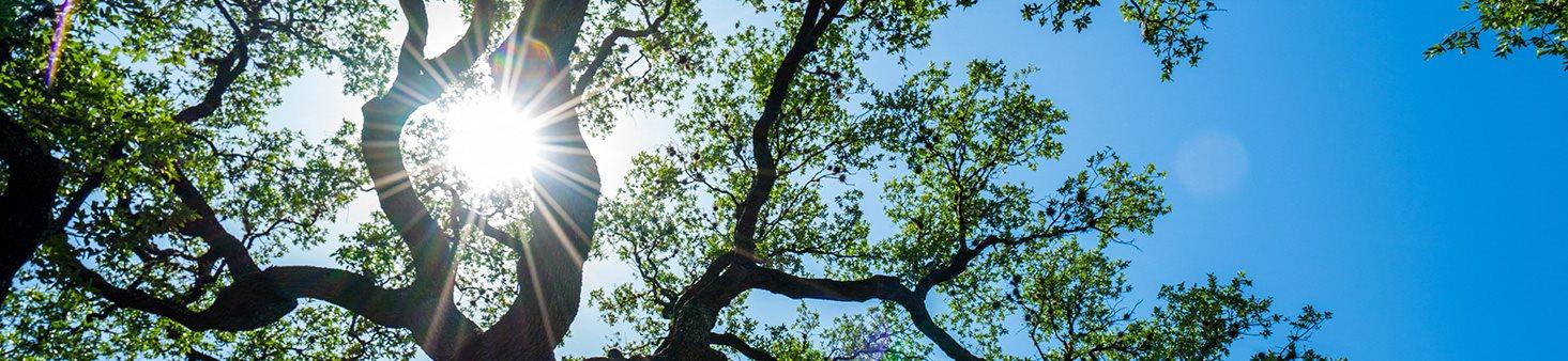 InnerBannerLive-Oak-Tree