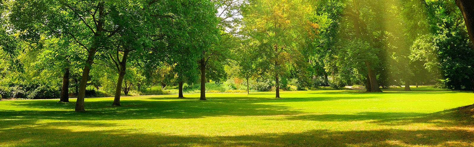 park with large grass area and trees