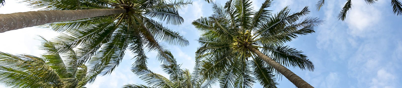 Palm trees-Santa Clara I Apartments Miami, FL